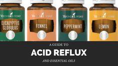 Essential Oil Recipes for Abdomen Concerns and Acid Reflux Acid Reflux Essential Oils, Essential Oils For Heartburn, Digize Essential Oil, Essential Oil Blends, Acid Reflux Relief, Acid Reflux Treatment, Stop Acid Reflux, Acid Reflux Remedies, Doterra