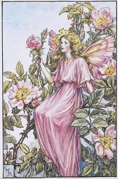 Illustration for the Wild Rose Fairy from Flower Fairies of the Summer. A girl fairy sits in a wild rose bush facing right.  										   																										Author / Illustrator  								Cicely Mary Barker