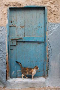 Blue door... and cat.