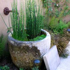Do this with my big pot!  container water garden - Blasen Landscape Architecture