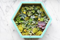 DIY Succulent Wall Planter Closer