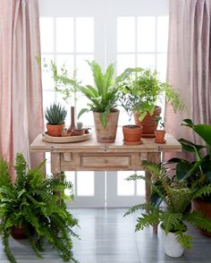 Love the mix of rustic, ranch-inspired pieces with the feminine pink curtains and totally lush, overgrown potted plants!