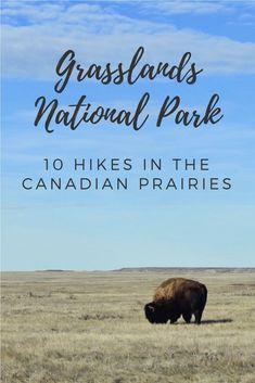 Grasslands National Park: Hiking in the Saskatchewan Prairies Canada Travel, Travel Usa, Saskatchewan Canada, Parks Canada, Visit Canada, Travel Guide, Travel Ideas, Outdoor Adventures, Hiking Trails