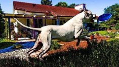 5 Actividades para EJERCITAR a tu DOGO ARGENTINO DENTRO o fuera DE CASA Goats, Horses, Animals, The World, Missing Persons, Natural Disasters, Exhibitions, Pets, Activities