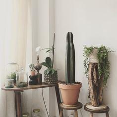 #home #nature #cactus #plants #design #light