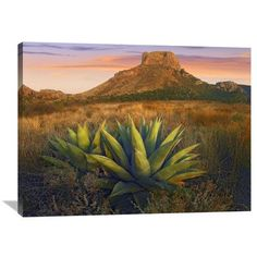 Global Gallery Nature Photographs Casa Grande Butte with Agave in Foreground, Big Bend National Park, Texas Photographic Print on Canvas Size: