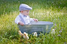 Baby Easter Spring Picture with live chicks!