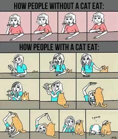how people with/without a cat eat