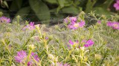 Cobweb on plants