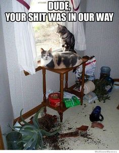 Dude, your shit was in our way Hate Cats, Silly Cats, I Love Cats, Fat Cats Funny, Top Cats, Crazy Cats, Cats And Kittens, Funny Kitties, Humor Animal