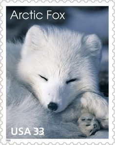The arctic fox is a solitary animal.  In winter, it eats the remains of a polar bear's dinner  or finds a newborn seal.  In summer, it lives in burrows and eats eggs, birds, lemmings, voles and berries.