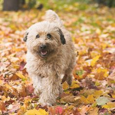 Role: Sales Team Pets: Sophie (Labradoodle)   Any Memorable Stories That Stand Out Since Starting With Freshpet?  The first few months of starting the company, I remember renting a delivery...