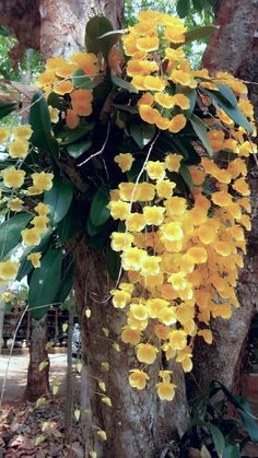 Tree mounted orchid- shopprice is a largest online price comparison site in uk…