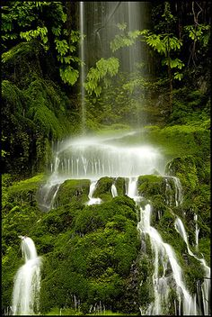 Quinault Rain Forest Waterfall, Washington