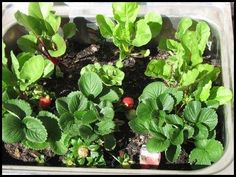 Growing Vegetables in Containers - Container Vegetable Gardening Instructions