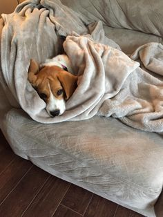 Cute Beagles, Cute Puppies, Cute Dogs, Dogs And Puppies, Baby Beagle, Beagle Puppy, Puppy Dog Eyes, Cute Funny Animals, Puppy Love