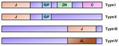 Structural classification of J-proteins