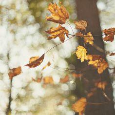"""he called it """"Autumn"""" / Image via: Alice Gao #fall #autumn #calm"""