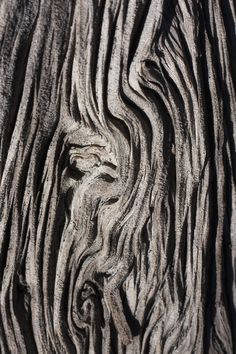 Natural wood with sculptural patterns & textures; tree bark; organic form; nature's artwork