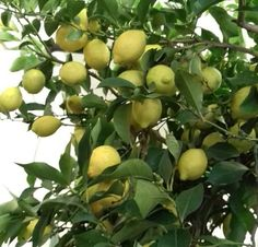 Fruit, Gardening, Food, Plant, Lawn And Garden, Essen, Meals, Yemek, Eten