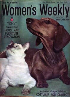 vivatvintage: 1967 Women's Weekly cover with Dachshund and Siamese cat.