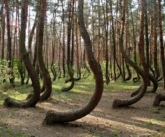 Botanic Notables: The Crooked Forest   Garden Design