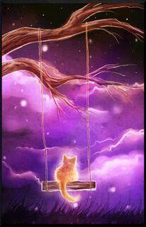 Good Night, Stars, Good Night Sky