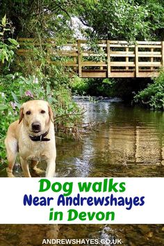 Andrewshayes Holiday Park has some Perfect Beautiful Relaxing East Devon Dog Pet Friendly WALKS for you all to go on. Enjoy the stunning Devon Countryside. Dog Friendly Holidays, Pet Dogs, Pets, Holiday Park, The Other Side, Dog Walking, Dog Friends, Devon, Walks