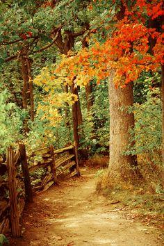 .magnifico bosque en otoño