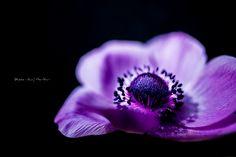 Purple flowers by Shuji Horikiri on 500px