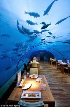 Первый в мире подводный ресторан в Индийском океане|Интересыч