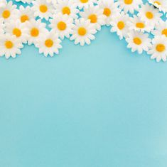 More than 3 millions free vectors, PSD, photos and free icons. Exclusive freebies and all graphic resources that you need for your projects Daisy Background, Pastel Blue Background, Flower Background Wallpaper, Flower Phone Wallpaper, Daisy Wallpaper, Cute Wallpaper Backgrounds, Flower Backgrounds, Cute Wallpapers, Leaves Wallpaper Iphone