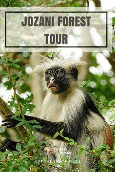 zanzibar popular tours jozani forest from stone town