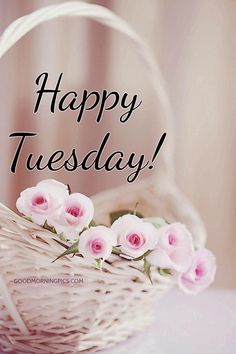 Good Night Quotes : Happy tuesday - Quotes Sayings Happy Tuesday Images, Happy Tuesday Morning, Good Morning Flowers, Good Morning Good Night, Good Morning Wishes, Happy Week, Happy Thursday, Sunday Morning, Happy Day Quotes