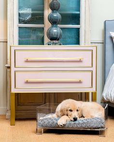 Sleepy pup in our lucite dog bed at Mecox Houston Lucite Furniture, Pet Furniture, Pet Beds, Dog Bed, Dog Love, Puppy Love, Glass Dresser, Dog Show, Perfect Place