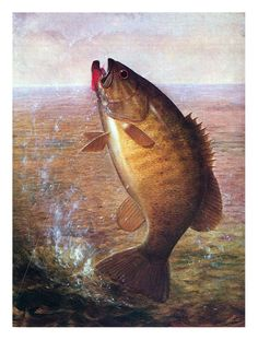 Smallmouth painting by Richard La Barre Goodwin (1900)
