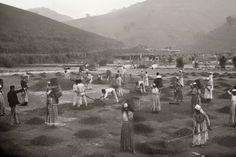 Escravos numa fazenda de café no vale do Paraíba.
