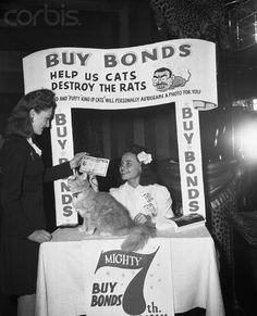 """Cat """"Puffy"""" Signing Autographs. Puffy Bares Paw in Bond Drive. New York. Puffy, famed mystic cat, perched at the bond booth in the Cafe Zanzibar tonight where he autographed his picture for bond purchasers as the Night Club 7th War Loan Drive got underway. Here, the king of all cats looks up at Ruth Rhind as she receives the bond she just purchased from Rose Horowitz. Puffy """"sold"""" over $ 50,000 in war bonds in his first two hours as bond salesman. May 14, 1945"""