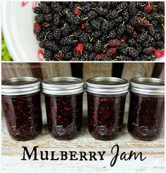 Cluck Wild Homestead: Mulberry Jam Goat Milk - Homesteading~Canning, Dehydrating, Freezing - Jelly Recipes, Jam Recipes, Canning Recipes, Milk Recipes, Sweet Recipes, Mulberry Jam, Mulberry Tree, Mulberry Recipes, Marmalade