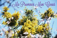 Mimosa et fleurs d'amandier