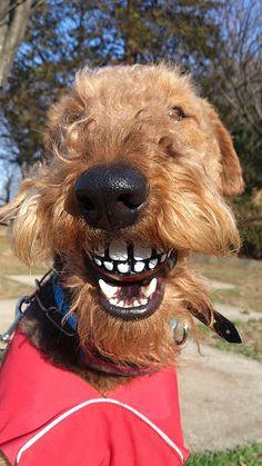 届きましたー! とっても笑えるお顔になってます(笑) >N様
