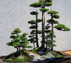 The Nature of Things: Bonsai and Espalier