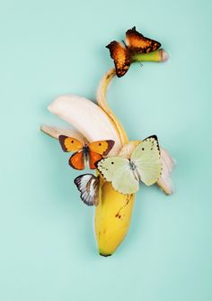 butterflies & banana | via fashionable fruit ~ Cityhaüs Design