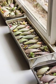 Rooting Succulent Leaf Cuttings with Honey,. this is an excellent site for learning succulent care! gardening on a budget #garden #budget