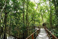 A principal proposta do Juma Amazon Lodge é fornecer uma experiência real e única na inexplorada Floresta Amazônica. Trabalhamos com grupos reduzidos, permitindo uma personalização dos pacotes.