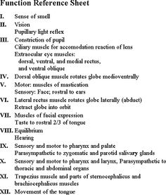 cranial nerves by number picture Cranial Nerves Function, Cranial Nerves Mnemonic, Nursing Process, Nursing Tips, Ob Nursing, Nursing School Graduation, Nursing School Notes, Nursing Schools, Med Student