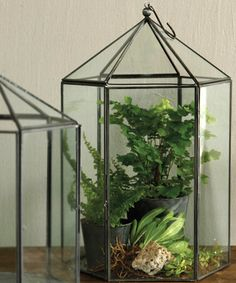 Pierre Hexagon Terrarium - Large (the answer to having parsley with Parsley)