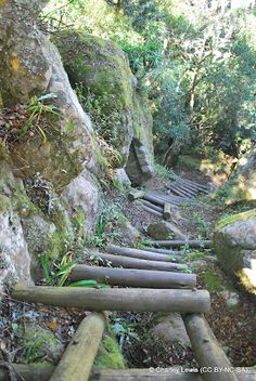 Hanglip Hiking Trail:   Hanglip Forest Station, Makhado (Louis Trichardt), Limpopo Province - The trail is well constructed and there is little erosion to be seen along the route especially as large sections of the trail have been in use for many years.