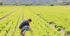 Lazio - Finanziamenti per i giovani agricoltori, prorogati i termini