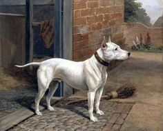 BULL TERRIER OIL PAINTING BY H. ATKINSON